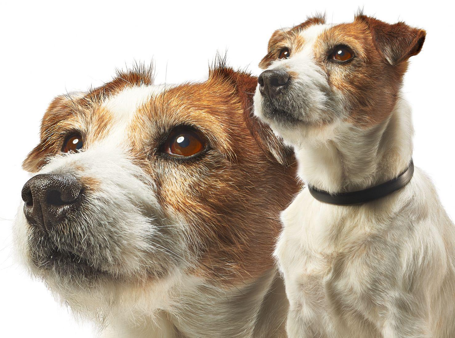 Beaphar Terrier